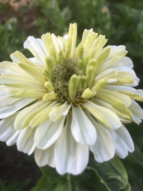 Schnittblumen der Saison